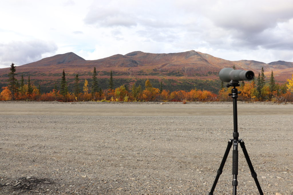 Glassing for moose with our Vortex spotting scope in Alaska in fall